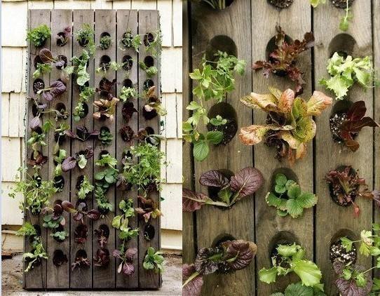 jardines verticales - tablon jardin